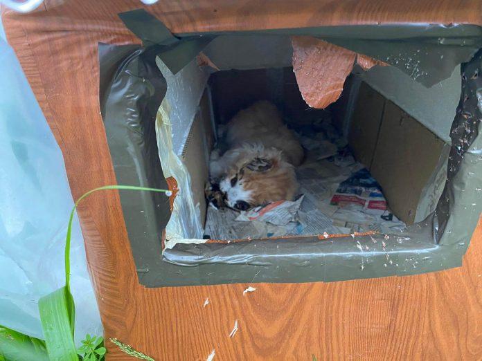 gato muerto en caseta