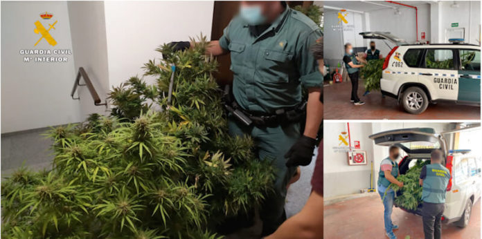 aprehensión marihuana Guardia Civil 1 copia 2