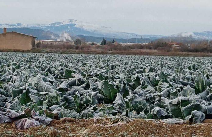 campos helados