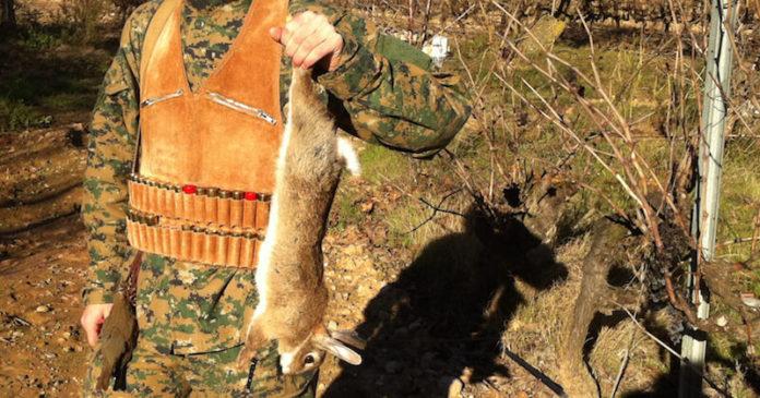 caza conejo
