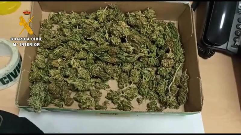 Marihuana vehiculo (2)