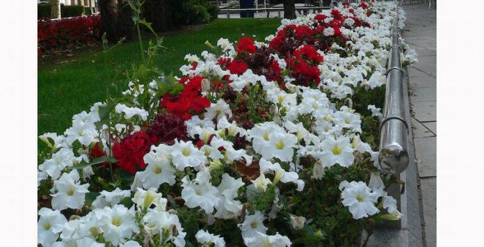jardines Mercadal 2