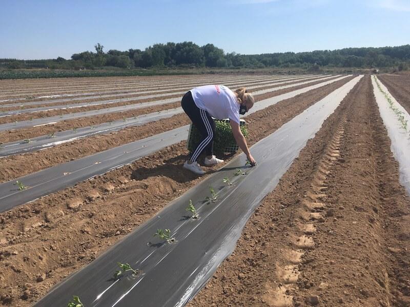 Agritom plantación 2021 2 copia