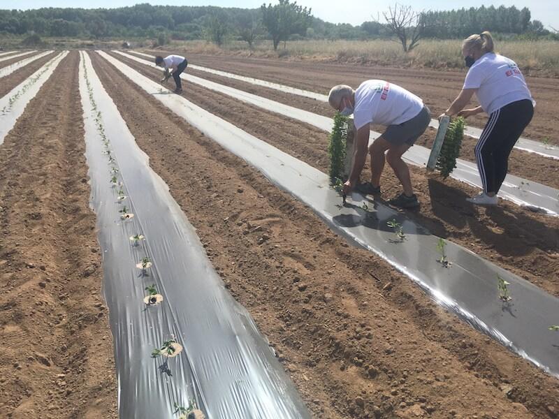 Agritom plantación 2021 3 copia