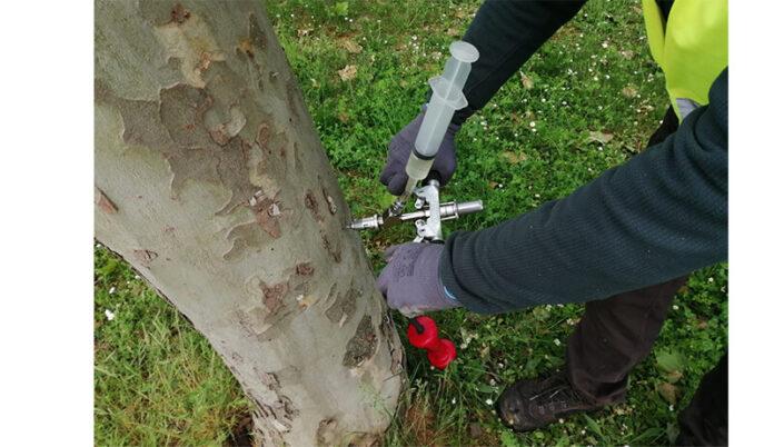 endoterapia tratamiento árboles