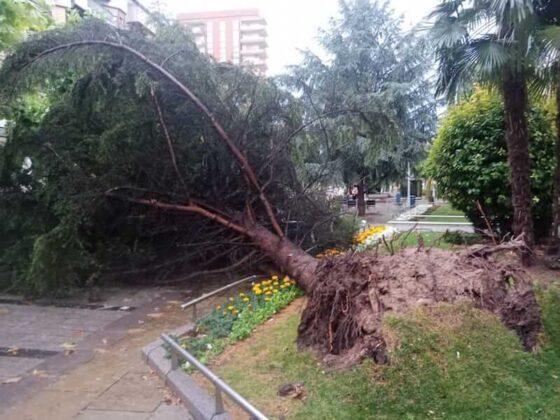 destrozos tormenta en Mercadal 3