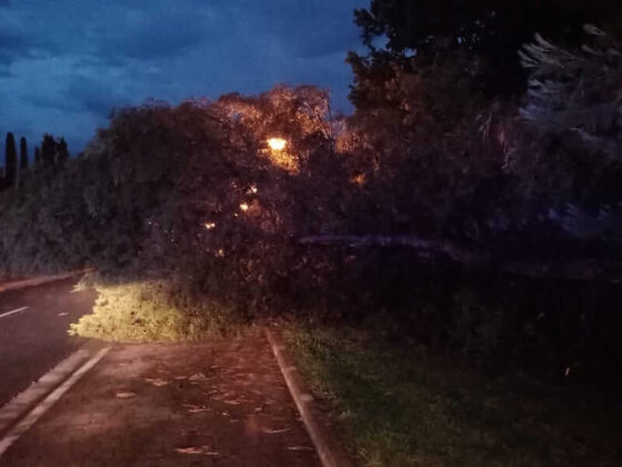 tormenta derriba pino en el parque del Cidacos