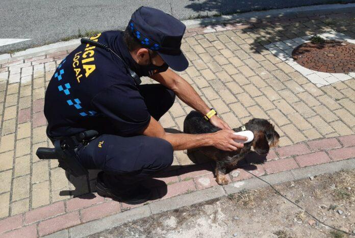 campaña perros policía local